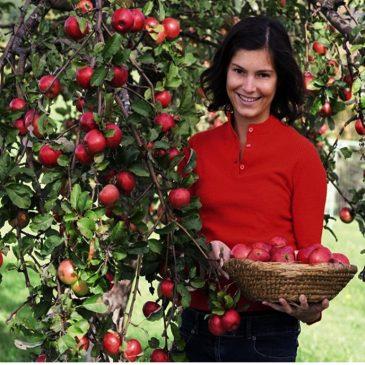 Cây táo đỏ