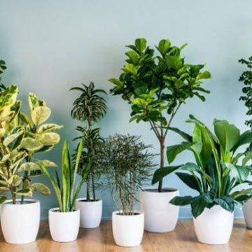 Cách chăm sóc cây trồng trong nhà không cần ánh sáng