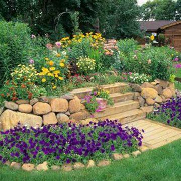 Tiểu cảnh sân vườn là cây ăn quả mang lại sự mới lạ và độc đáo cho khu vườn